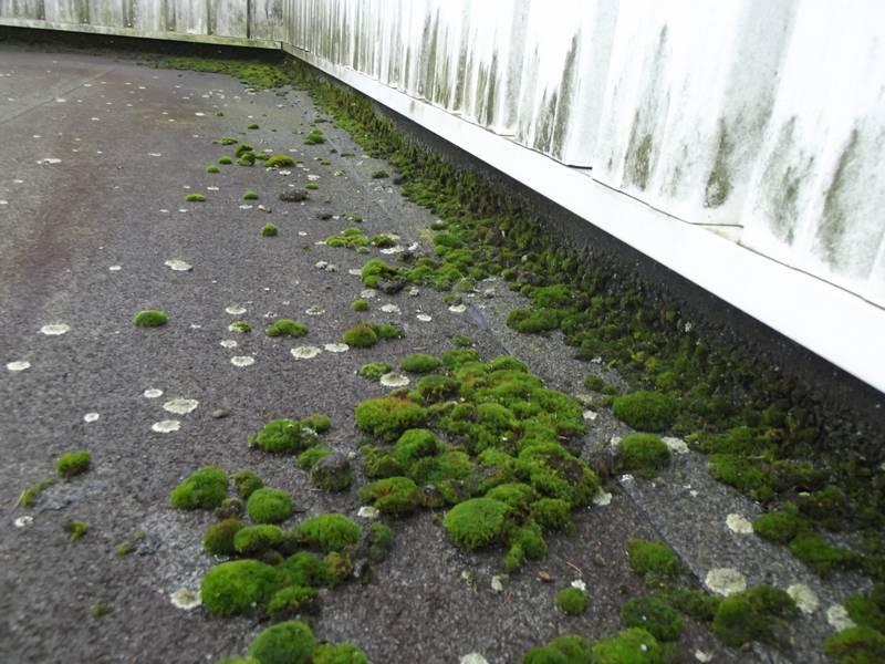 traces de mousse sur un toit plat